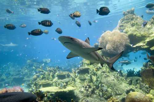 акулы шарм эль шейх